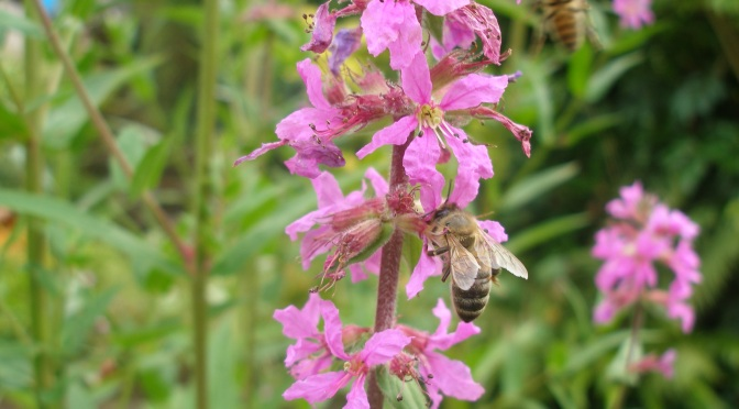 Bees and neonicotinoids – another twist in the tale.