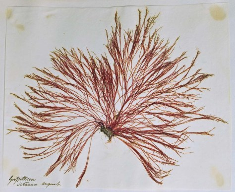seaweed 1 mod 2