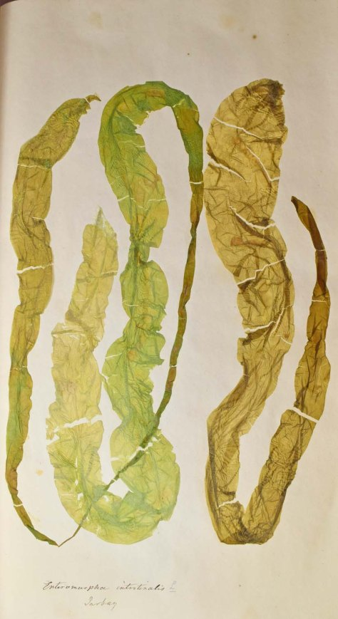 seaweed 3 mod 2