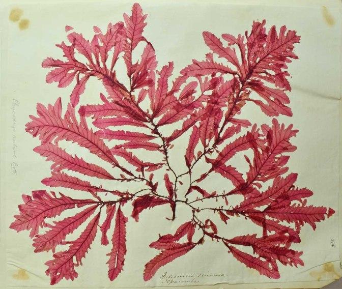 seaweed 5 mod 2