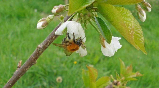 500 dead bumblebees – the chemical blitz of modern farming