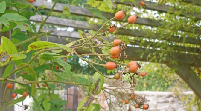 Crab apples, arsenic and suburbia – the September garden