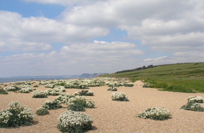 Cogden Beach: a special and unusual Dorset place