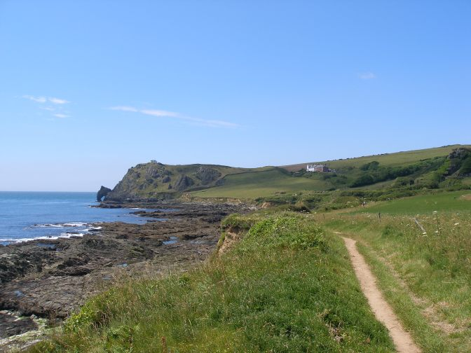 Looking for the Long-horned Bee in South Devon