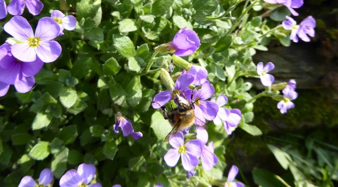Perfect poisons for pollinators – available from your local garden centre