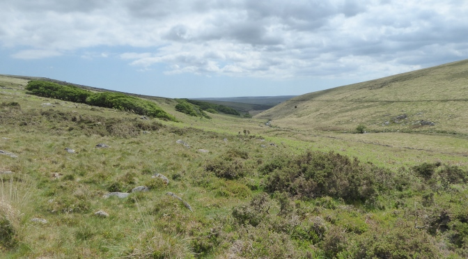 A Dartmoor Cuckoo Chorus – Lockdown Nature Walks 6