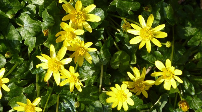 Signs of spring? – Lockdown Nature Walks 14